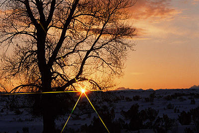 Sunrise Photograph - Silhouette Of Tree At Sunrise by Gene Mace