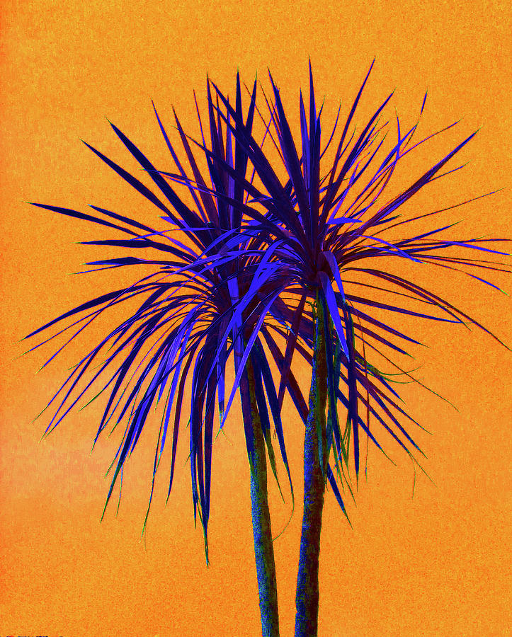 Palm Photograph - Silhouette On Orange by Margaret Saheed