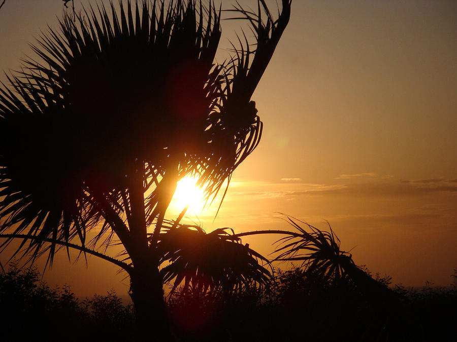 Sunset Digital Art - Silhouette Sunset by Sarah Vernon