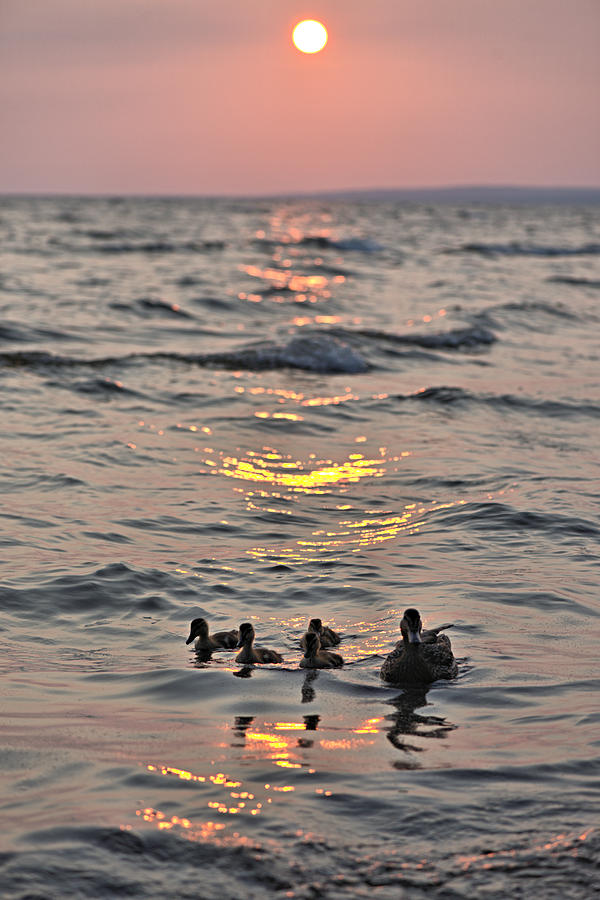 Silhouette Photograph - Silhouetted Ducks by Andrew Miles