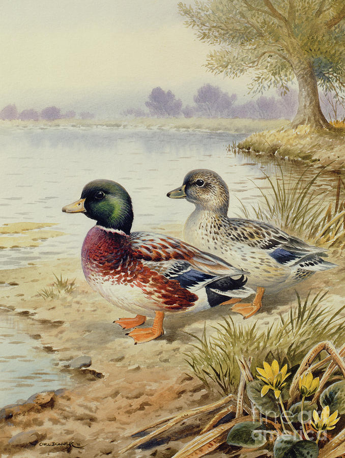 Duck Painting - Silver Call Ducks by Carl Donner