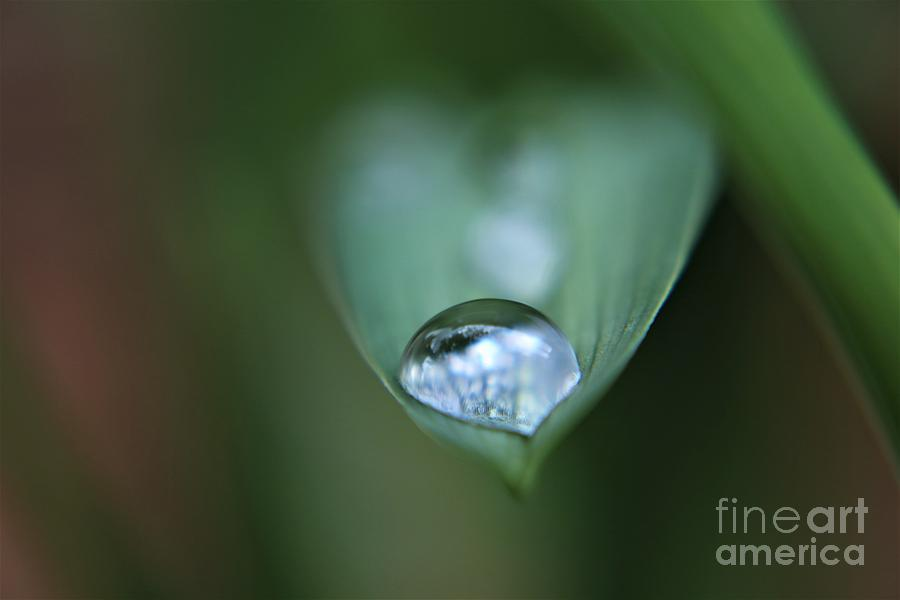 Silver Droplet Photograph