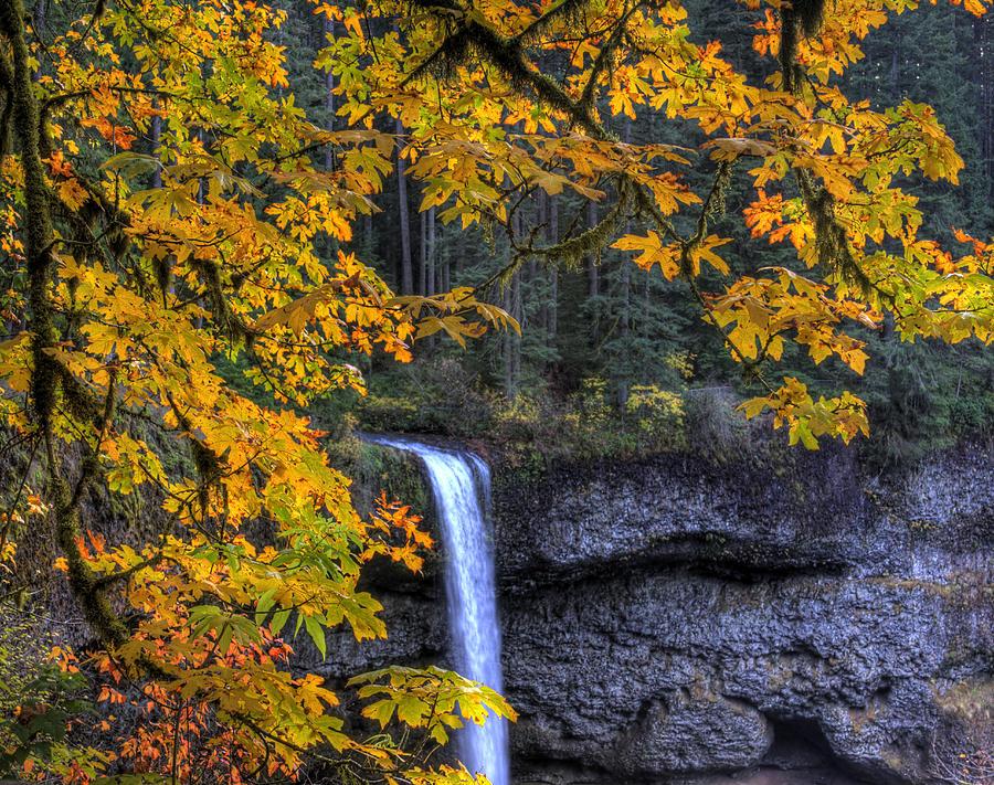 Landscape Photograph - Silver Falls State Park Oregon by Lee Santa