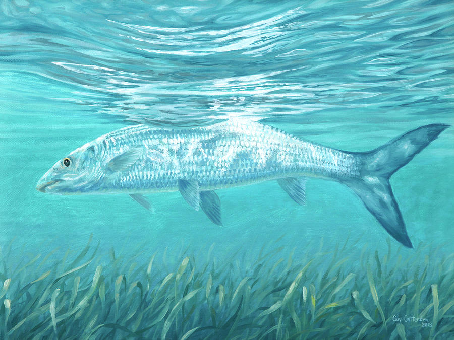 Bone Fish Painting - Silver Flash by Guy Crittenden