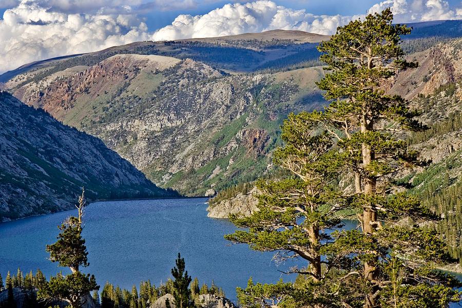Pine Trees Photograph - Silver Lake Pines by Chris Brannen