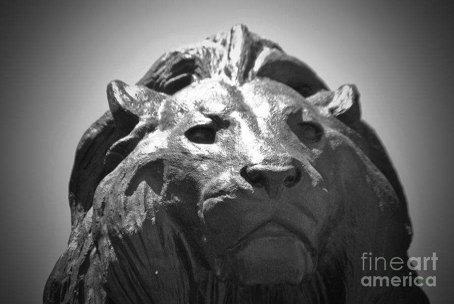 Baltimore Photograph - Silver Lion by Jost Houk