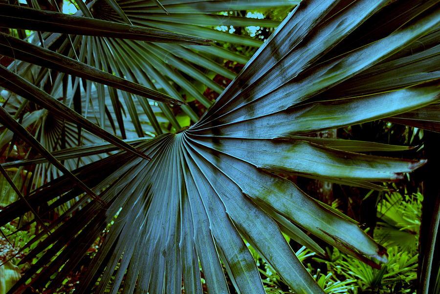 Palm Tree Photograph - Silver Palm Leaf by Susanne Van Hulst