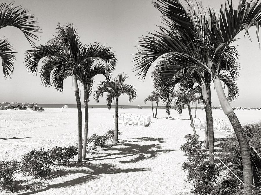 Palm Trees Photograph - Silver Sand by Joseph Mari