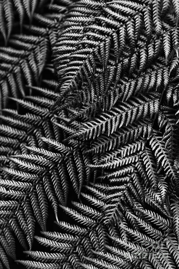Fern Photograph - Silvern by Andrew Paranavitana