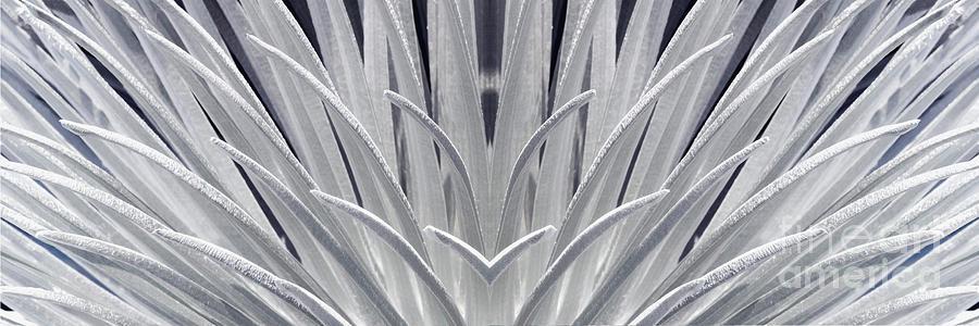 Silversword Mirror by Frank Wicker