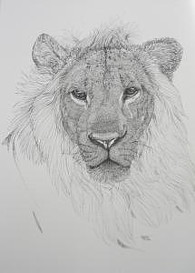 Print Drawing - Simba by Joanie Arvin