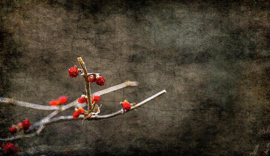 Nature Photograph - Simple Beauty by Garett Gabriel