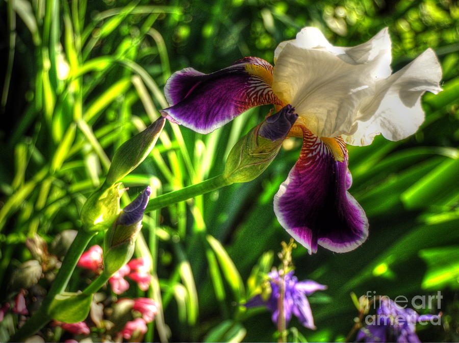 Iris Photograph - Simple Complexity by Chris Fleming