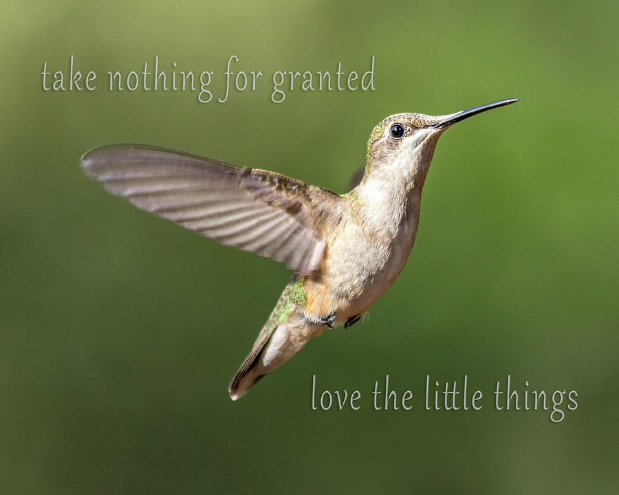 Hummingbird Photograph - Simple Country Truths Hummingbird by Betsy Knapp