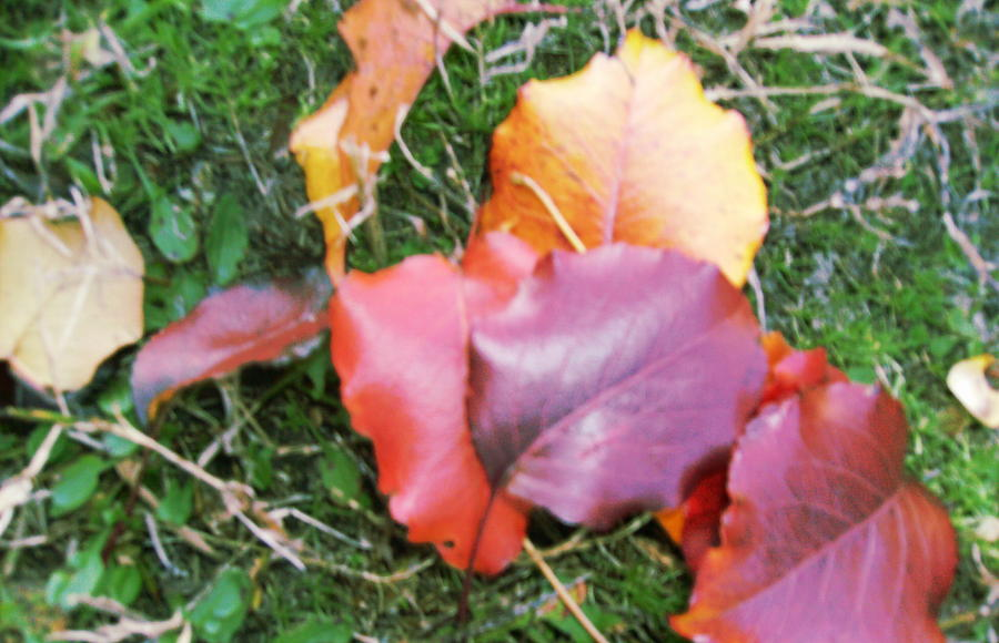 Leaves Photograph - Simple Enchantments by Anne-Elizabeth Whiteway