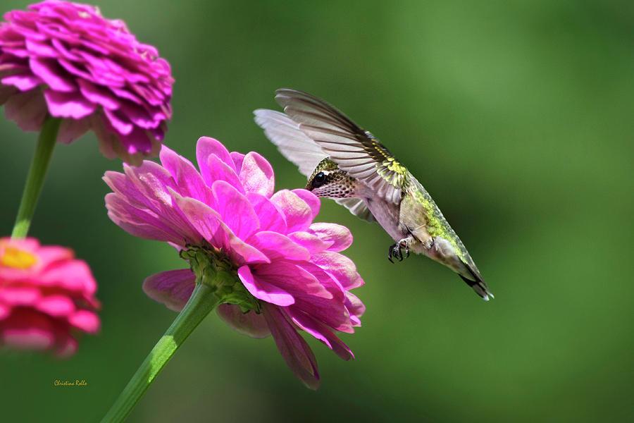 Simple Pleasure Hummingbird Art Prints for Sale