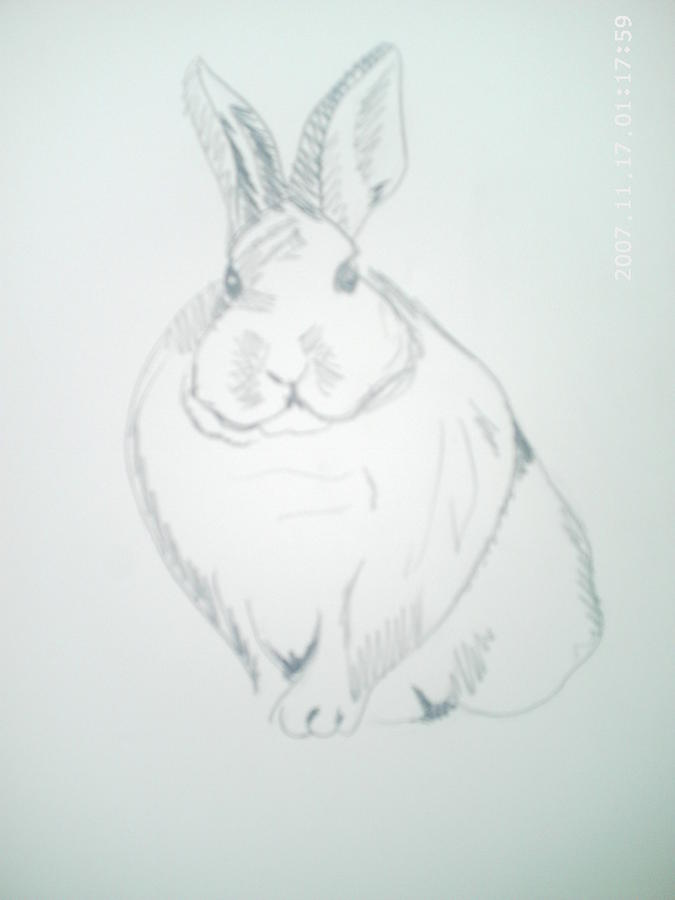 Rabbit Drawing - Simple Rabbit by Peter Fredericks