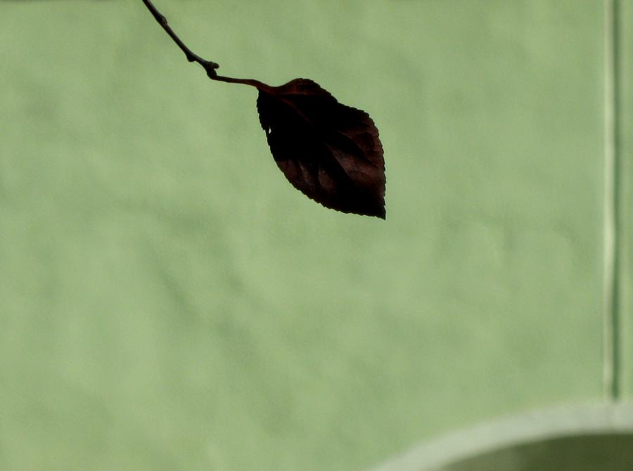 Nature Photograph - Simple Sign by Ioana Geacar