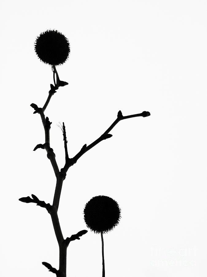 Simple Photograph - Simple Silhouette 3 by Tara Turner