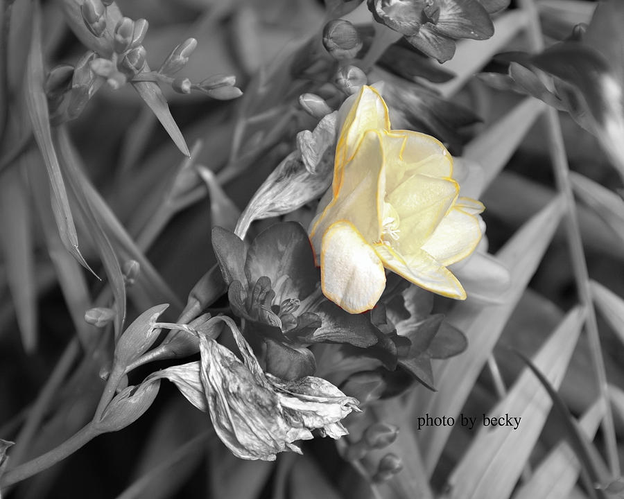 Yellow Photograph - Simple Yellow by Becky Carpenter