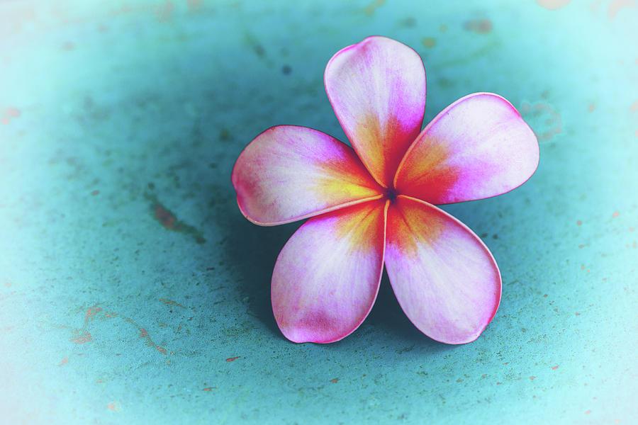 Plumerias Photograph - Simplicity by Jade Moon
