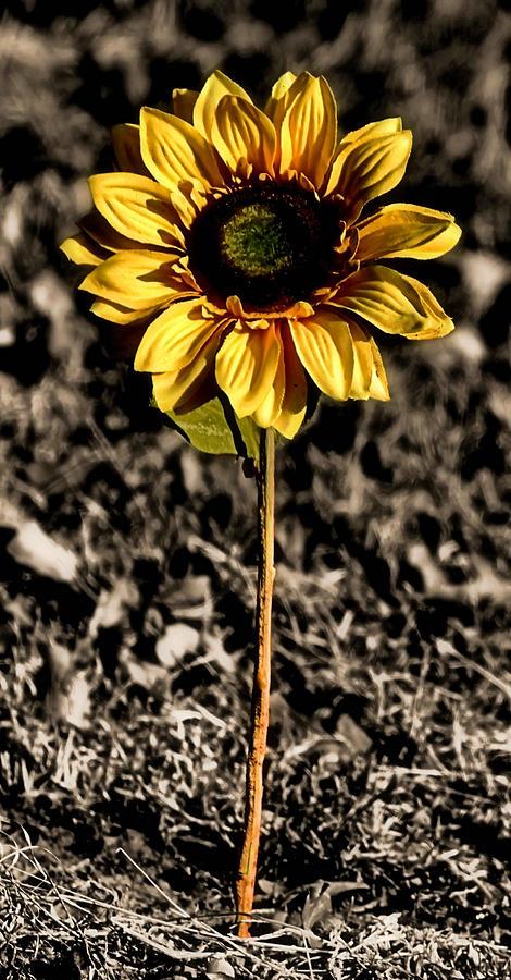 Flower Photograph - Simplicity by Karen Scovill