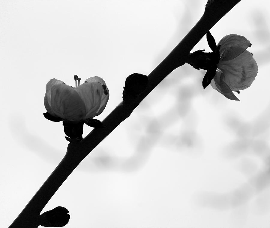 Simplistic Flower Photograph