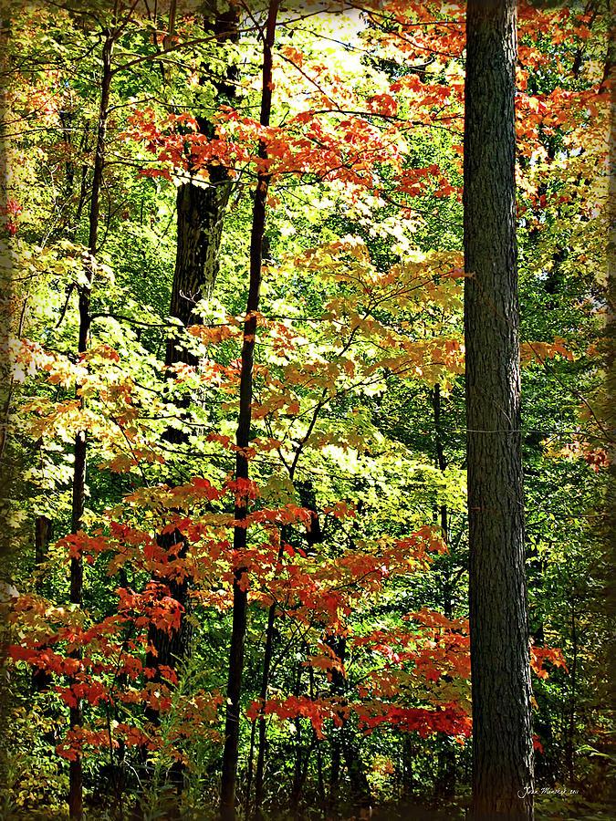 Autumn Digital Art - Simply Autumn by Joan  Minchak