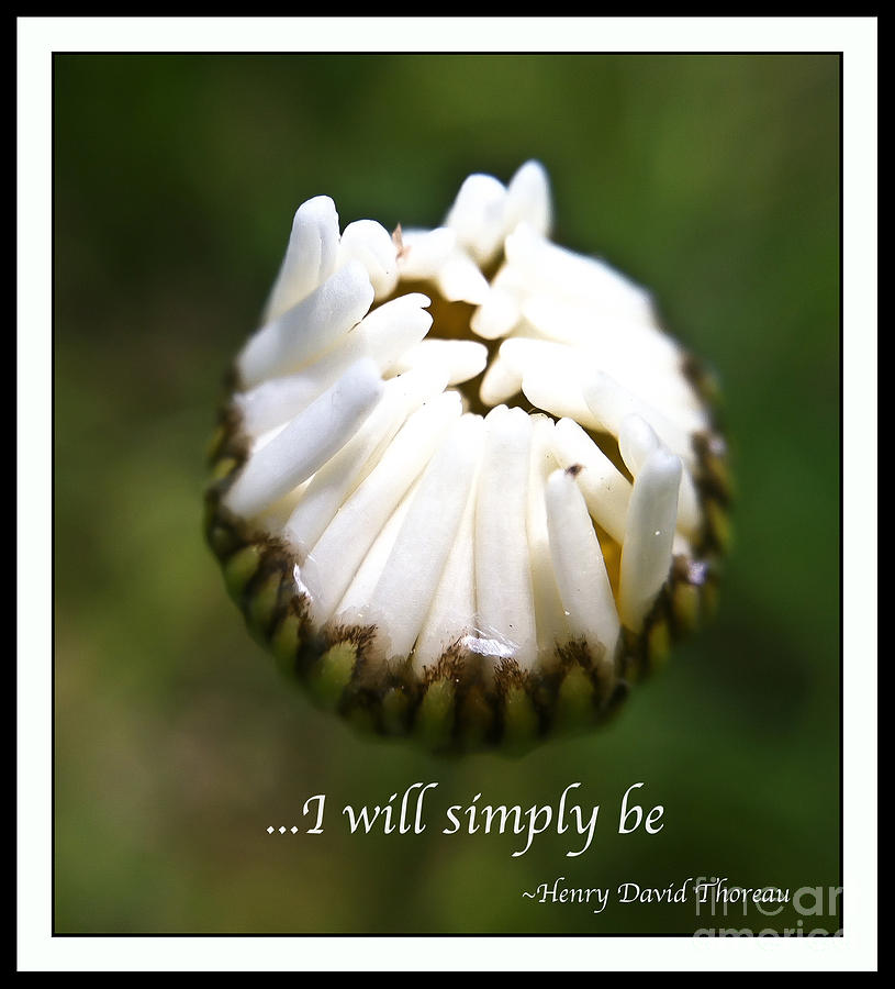 Daisy Photograph - Simply Be by Kerri Farley