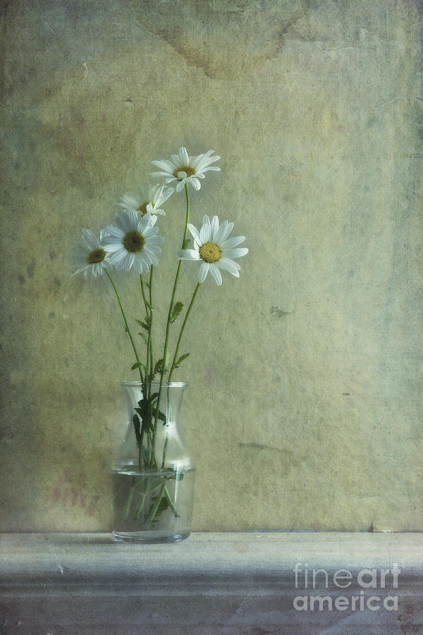 Daisy Photograph - Simply Daisies by Priska Wettstein
