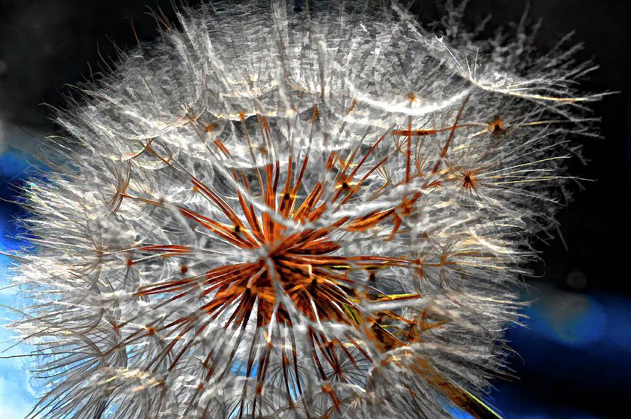 Asteraceae Photograph - Simply Grand 2 by Steve Harrington