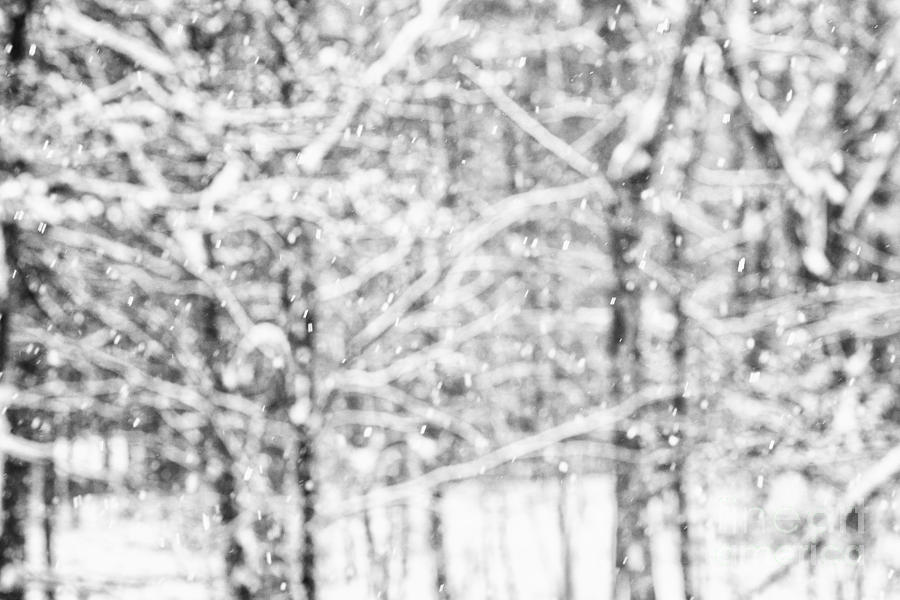 Snow Photograph - Simply Snowing by Sue OConnor