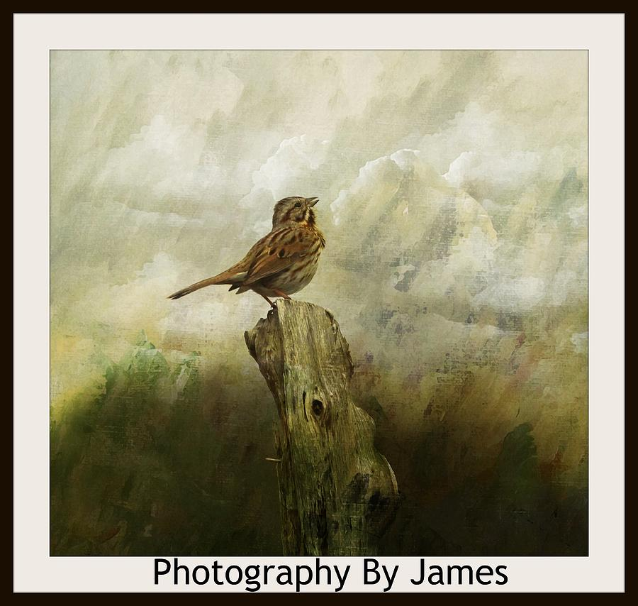 Sparrow Photograph - Sing by James Caine