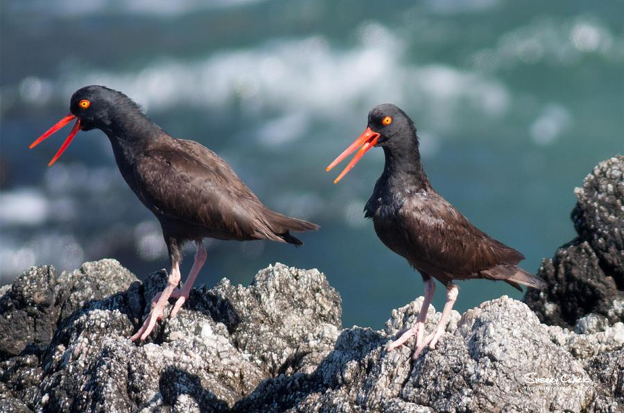 Sing Loud Photograph by Sherry Clark
