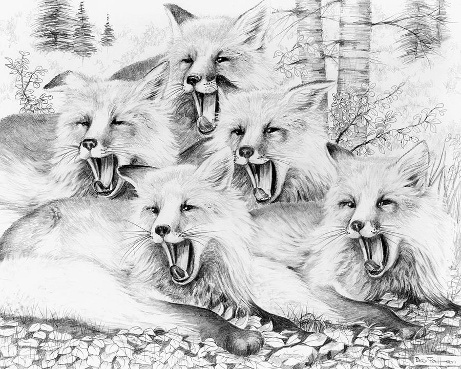 Wildlife Drawing - Singing Foxes by Bob Patterson
