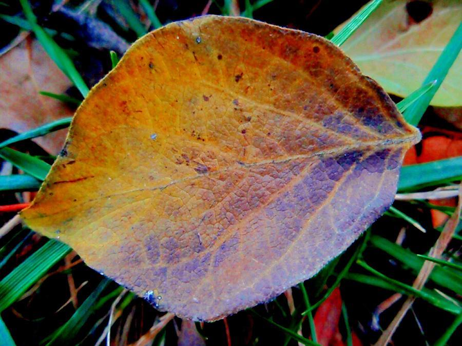Single Leaf Photograph - Single Brown Leaf by Beth Akerman