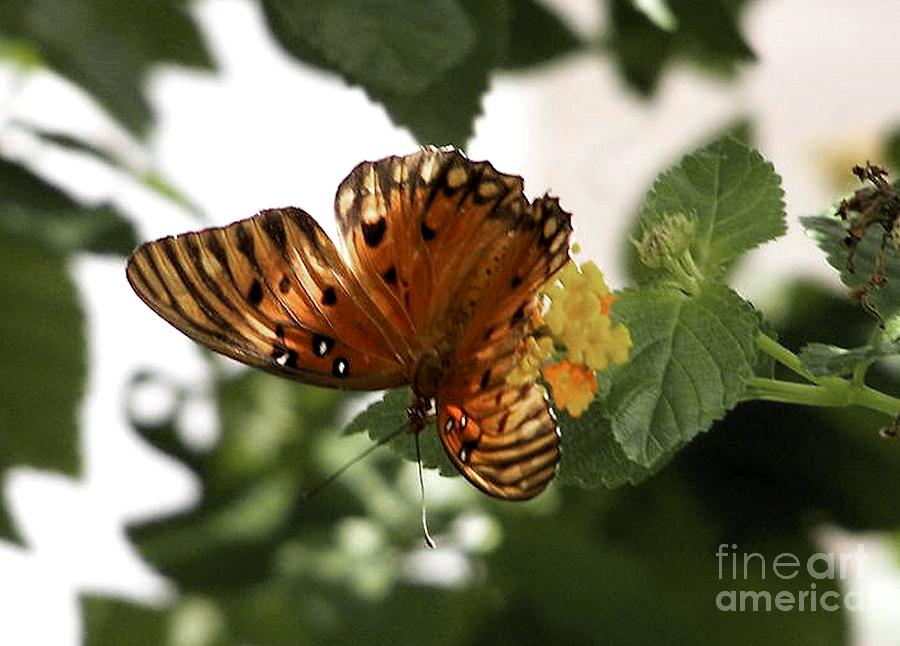 Single Butterfly Photograph