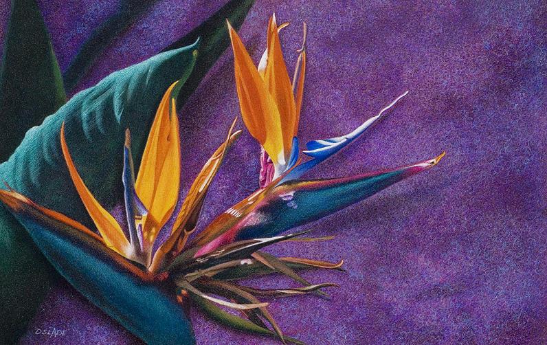 Bird Of Paradise Drawing - Single Flight by Donna Slade