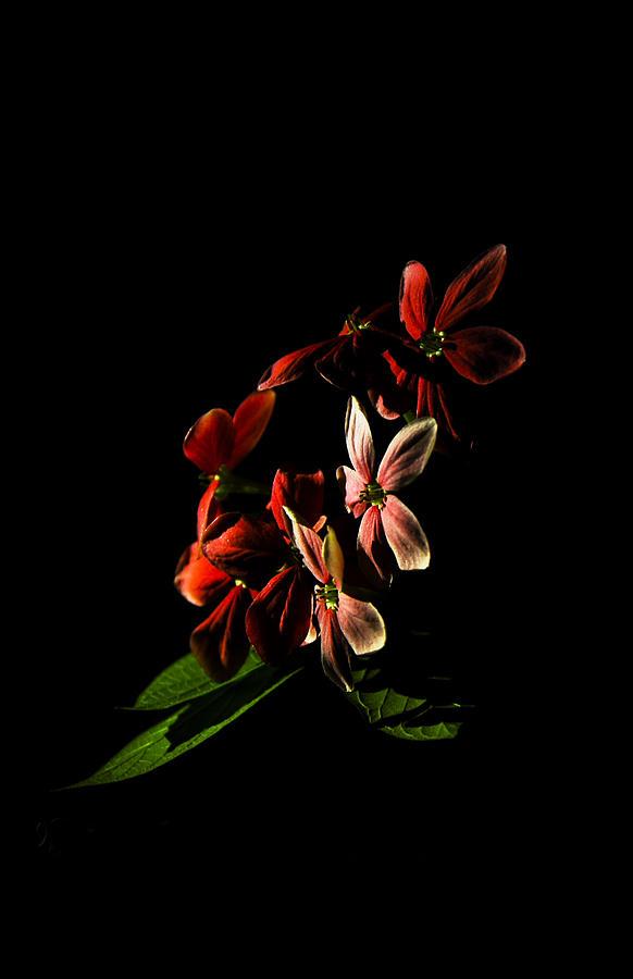 Single Flower Photograph - Single Flower by Nguyen Truc