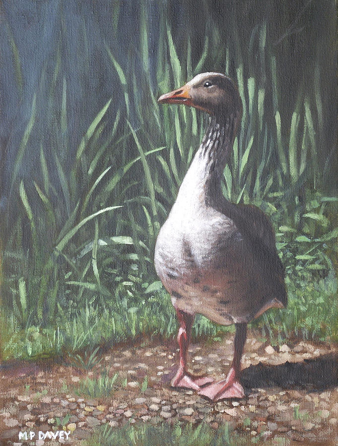 Goose Painting - Single Goose by Martin Davey