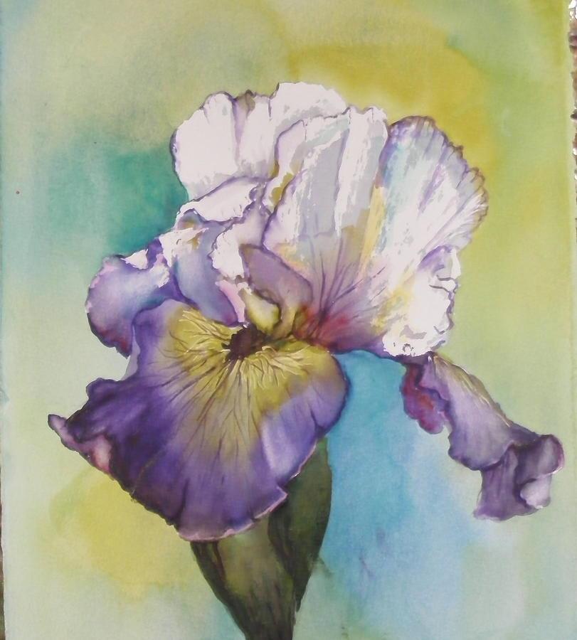 Iris Painting - single Iris by Diane Ziemski