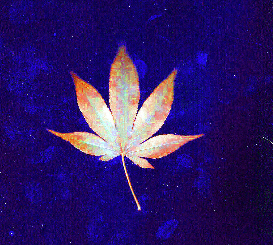 single leaf with blue background  by Wayne Potrafka