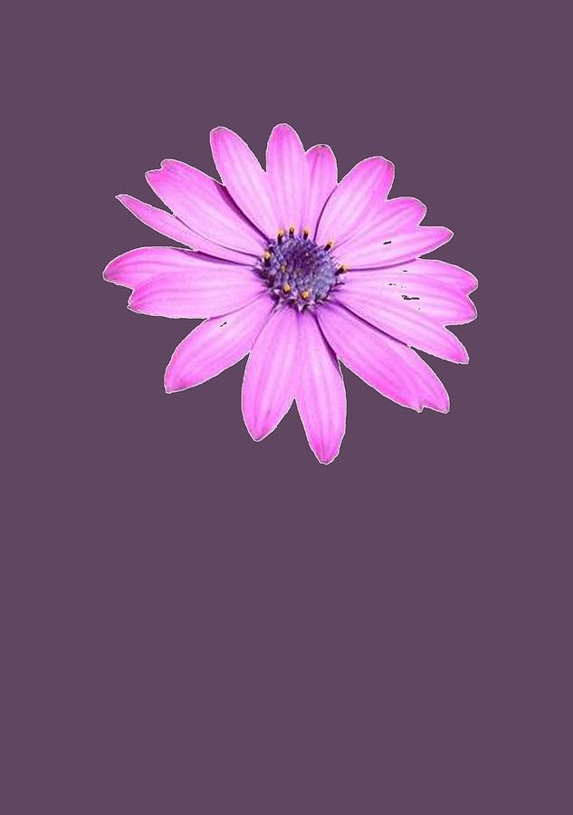Birthday Painting - Single Pink African Daisy by Taiche Acrylic Art