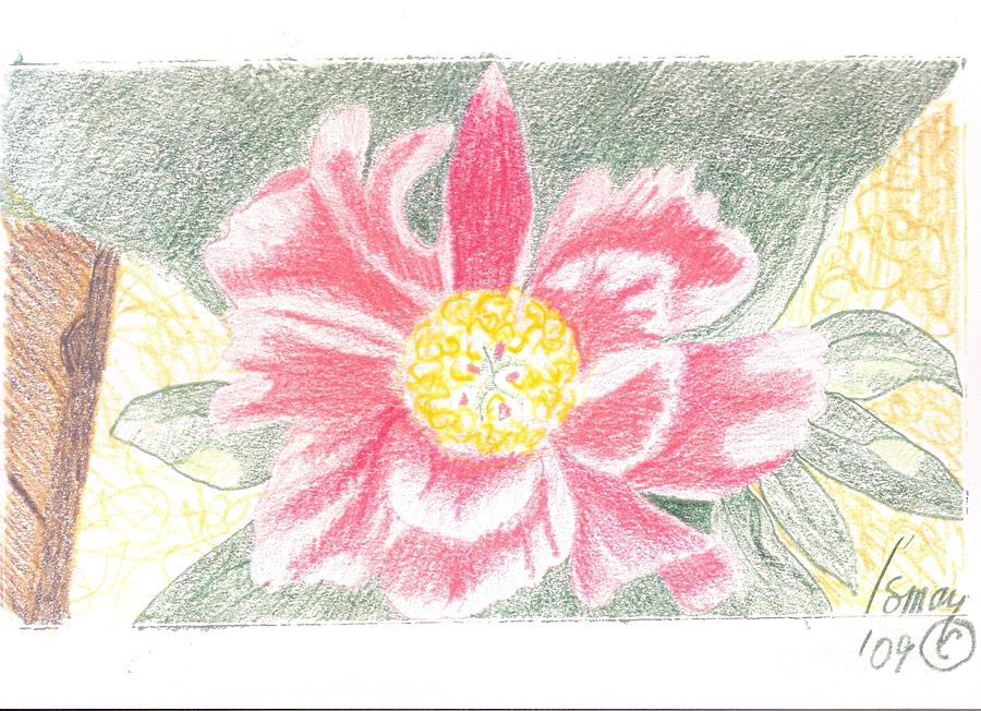 Pink Flower Drawing - Single Pink Peone - 2 by Rod Ismay