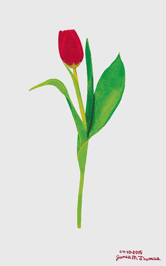 Red Tulip Digital Art - Single Red Tulip by James M Thomas