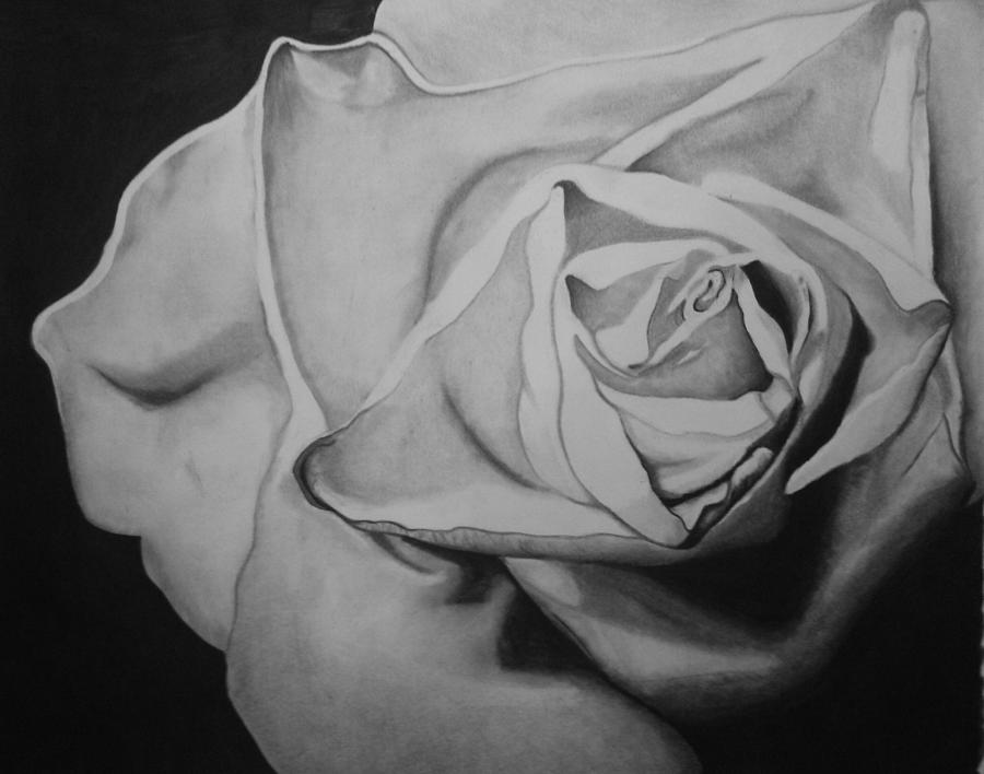 Charcoal Drawing - Single Rose by Jason Dunning