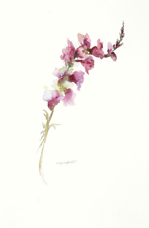 Single Stem Snapdragon Painting By Sandra Strohschein