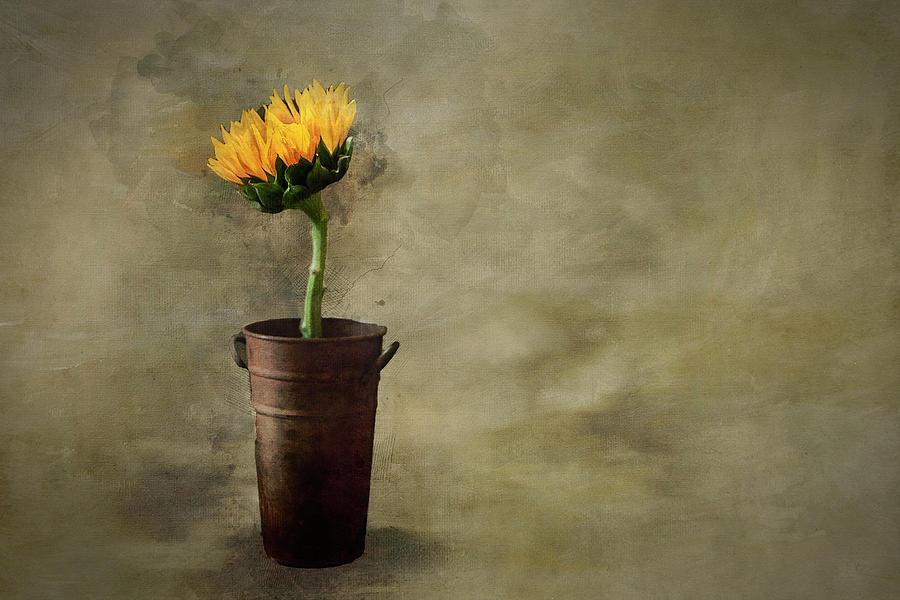 Single Sunflower by Paul Bartell