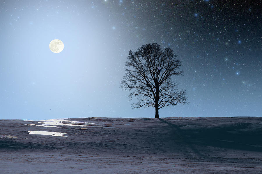 Single Tree in Moonlight by Larry Landolfi