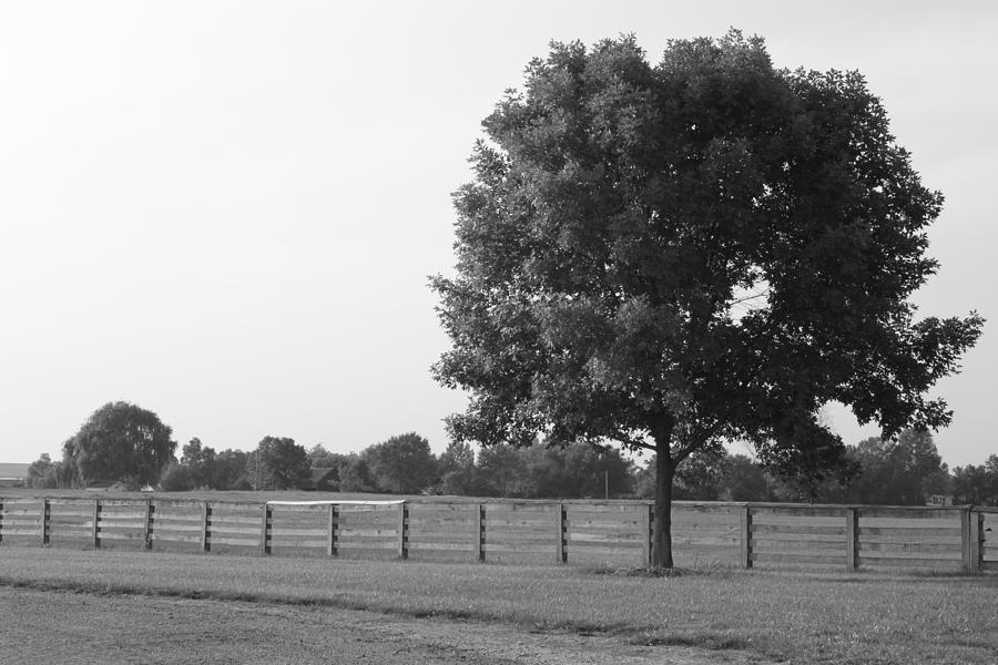 Tree Photograph - Single Tree by Lauri Novak
